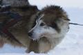 Husky-express