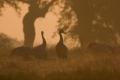 2008-02-01-08-extremadura