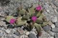 2006-04-25-32-usa-reise-death-valley-tour
