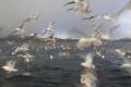 20120505-norwegen-19-28-34