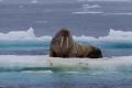 20150706 Svalbard 22-58-53 24