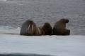 20150707 Svalbard 00-01-25 08