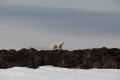 20150709 Svalbard 21-10-38 44