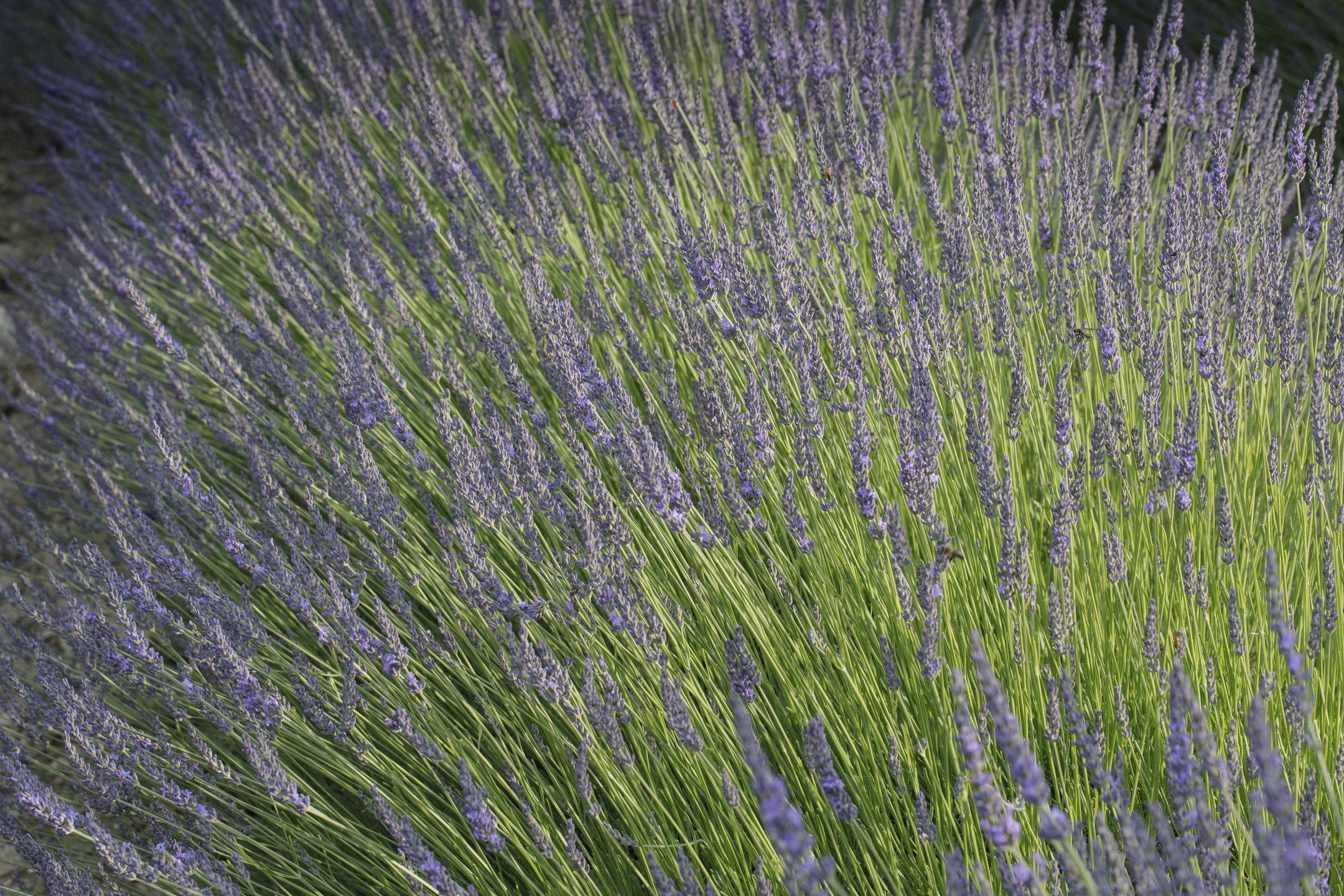 20210627-Provence-19-10-31-028