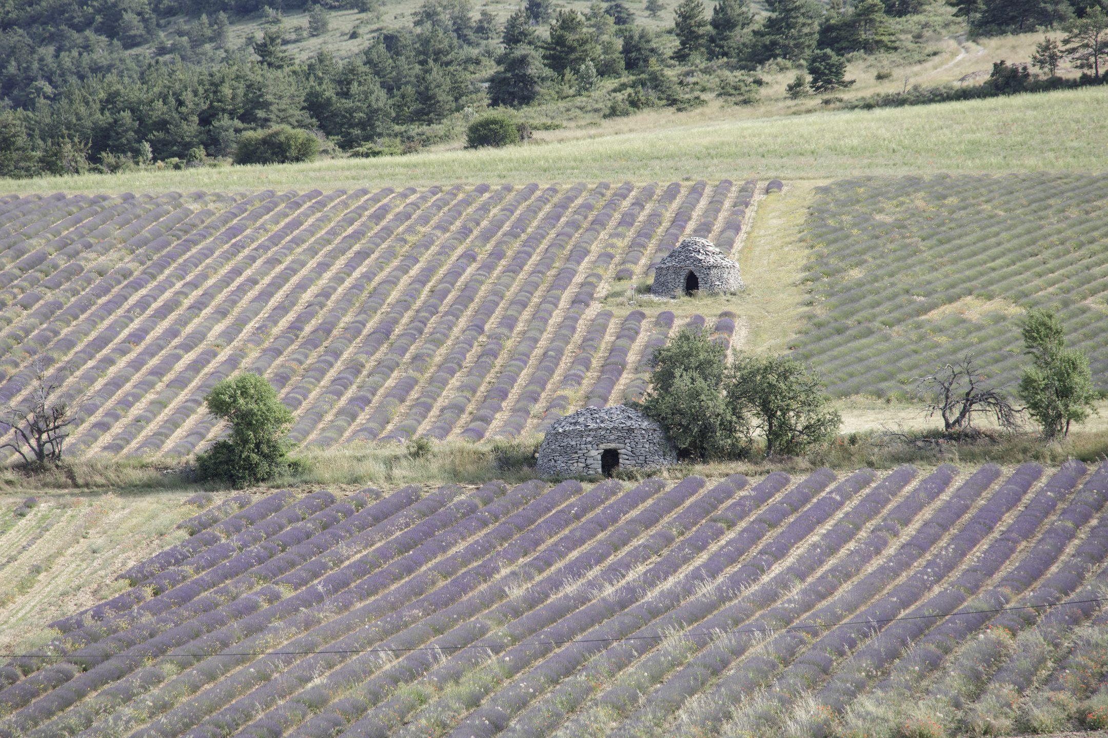 20210628-Provence-08-57-14-006