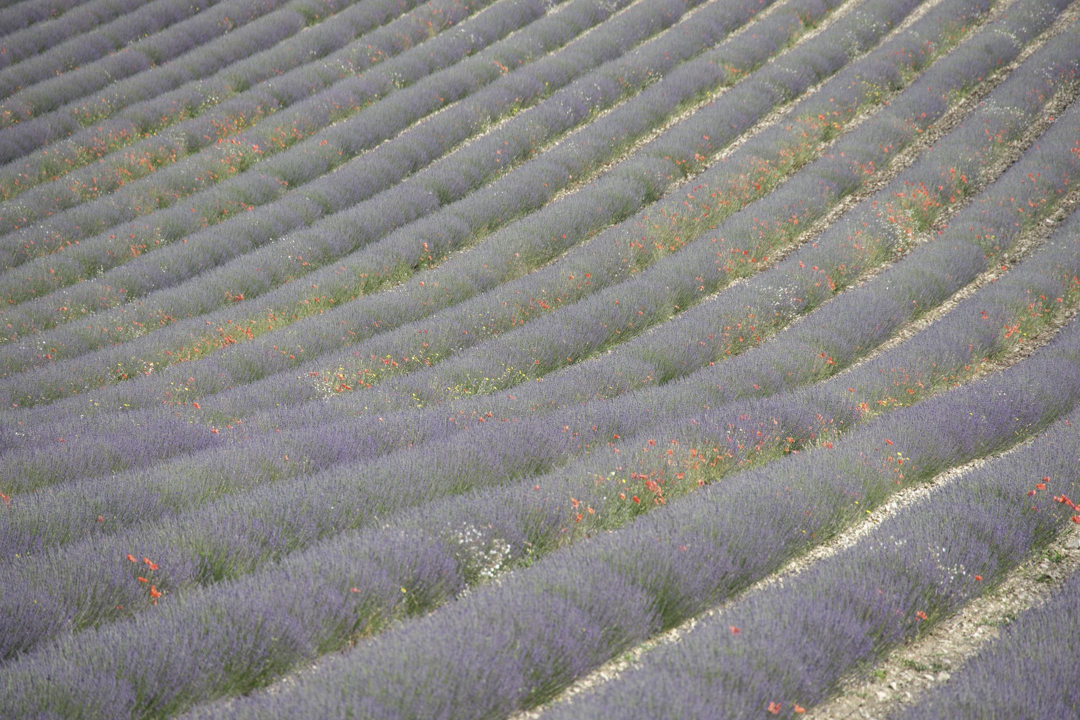 20210628-Provence-08-58-21-008