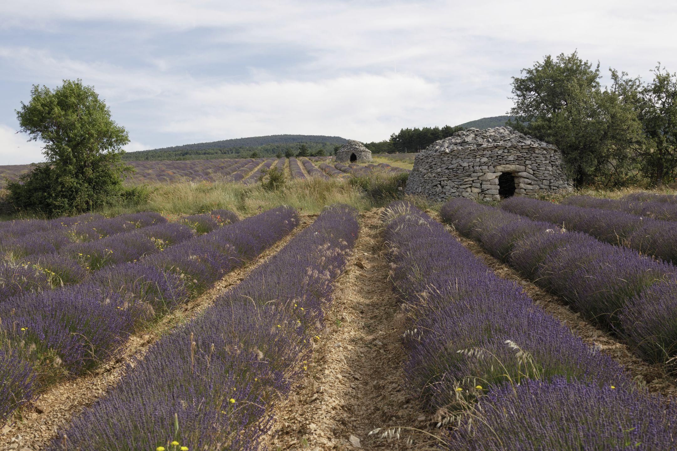 20210628-Provence-09-36-53-017