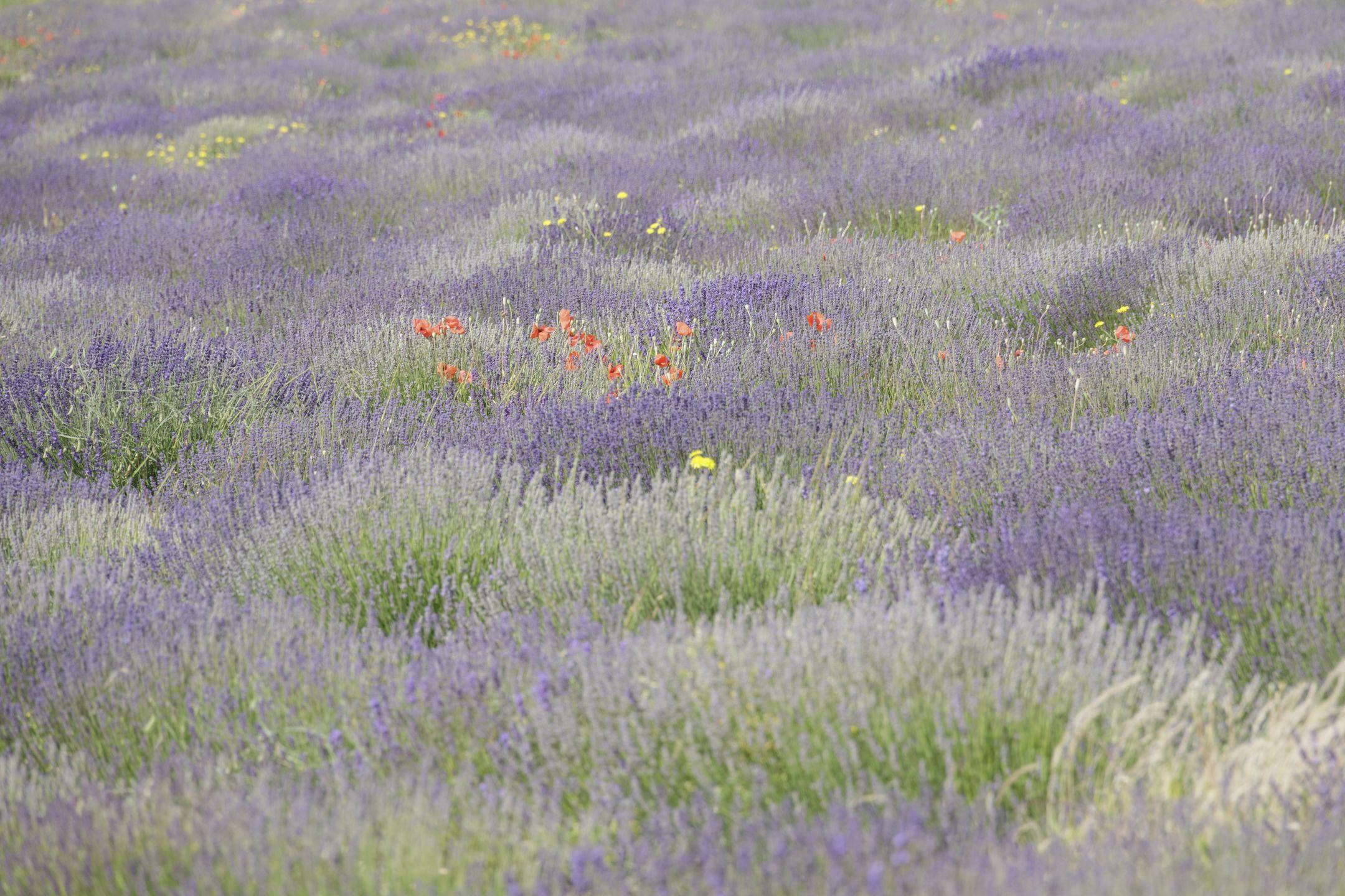 20210628-Provence-10-05-34-023