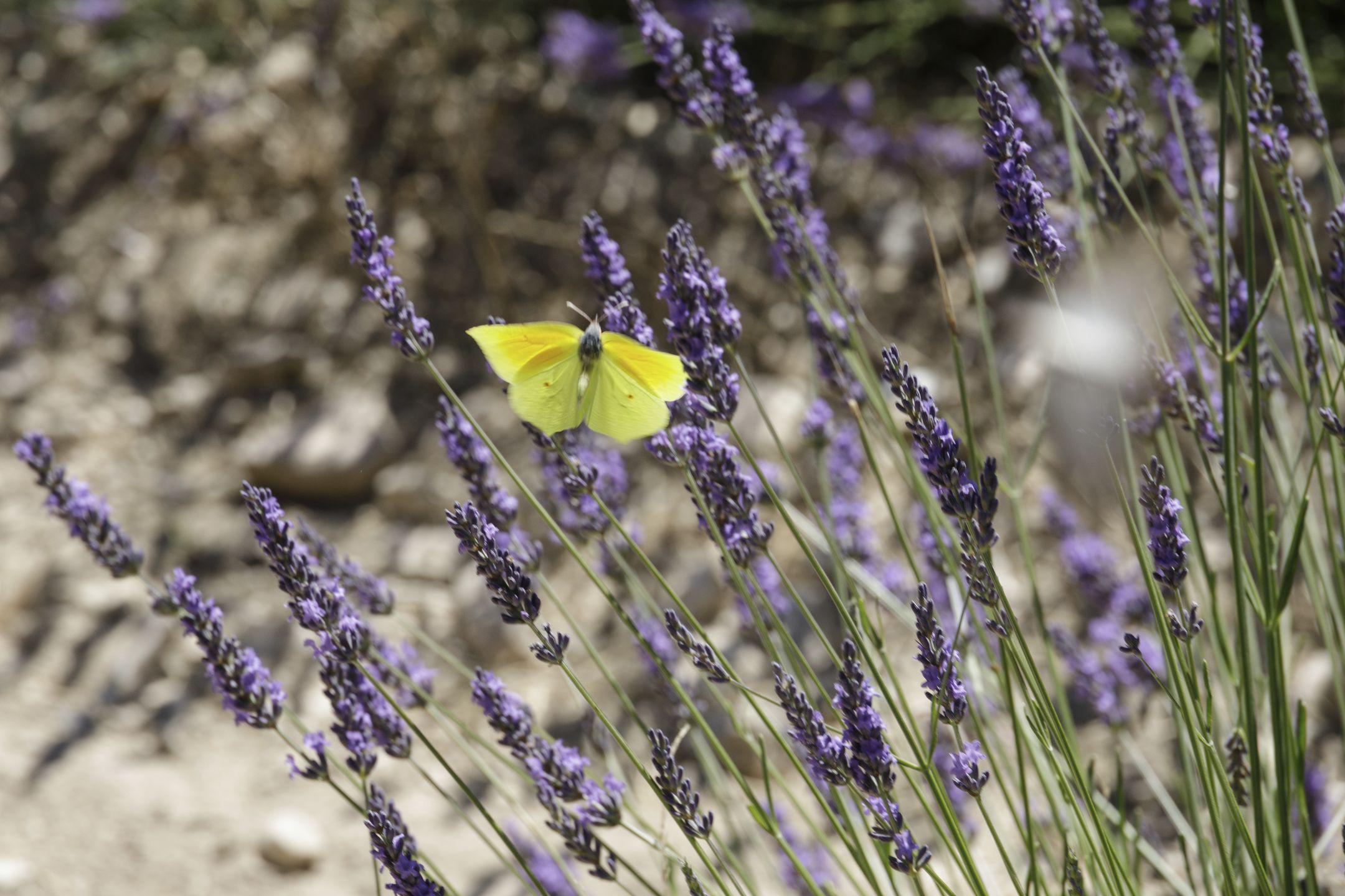 20210629-Provence-11-36-17-042