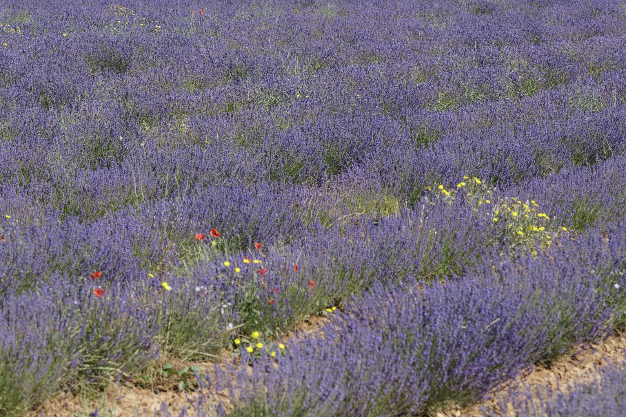 20210630-Provence-09-43-21-007