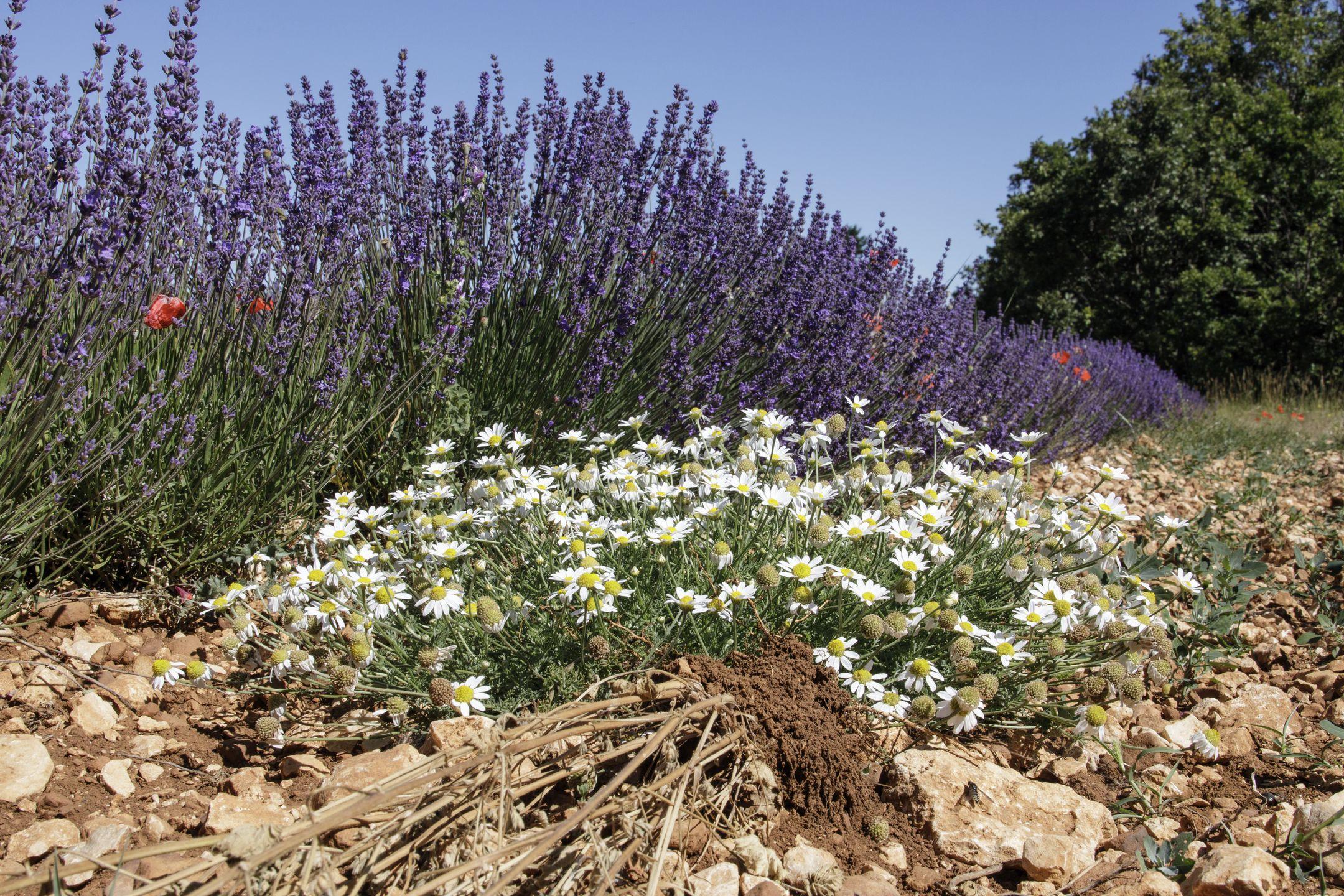 20210630-Provence-10-32-35-024